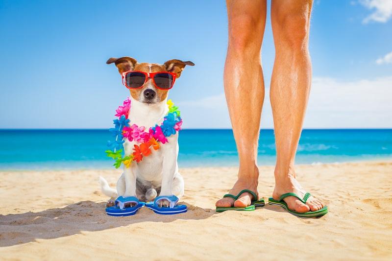 Perro playa gafas chanclas