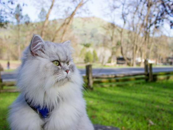 Gandalf disfruta del tiempo fuera viajando con su familia