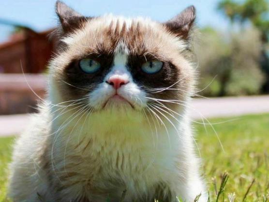 Grumpy cat también es un ejemplo de blogs de animales que viajan con sus dueños