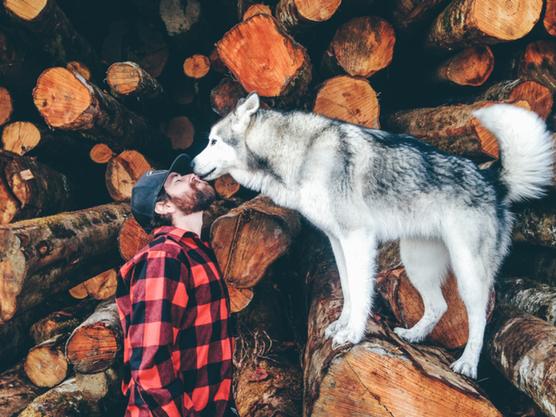 Loki y su blog de animales desmuestran que es posible viajar con tu mascota