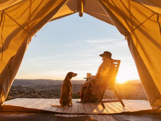 Blogs de animales que desmuestran que se puede viajar con mascota
