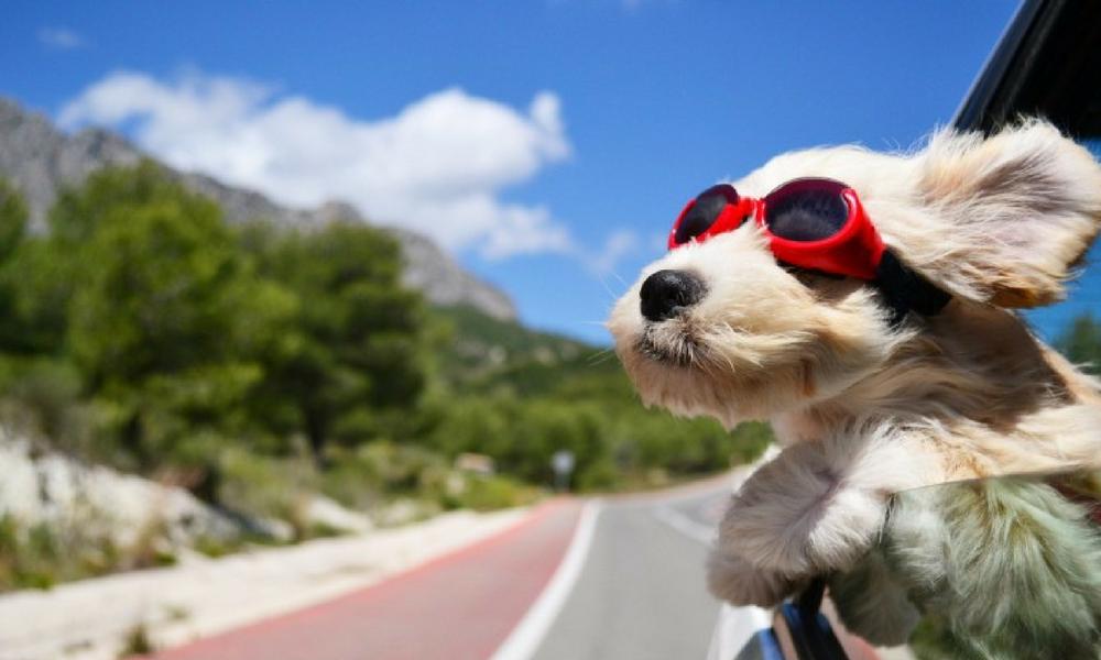 Dos chicas viajan con su perro en coche como ejemplo de blogs de animales viajeros