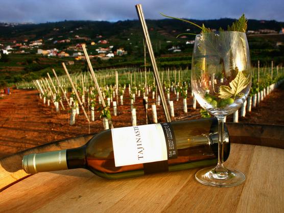 Bodegas en Tenerife que cultivan una variedad excelente de uva que podréis probar en una cata