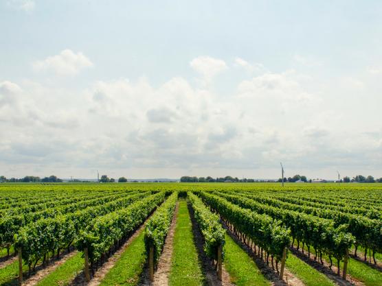 Ruta enológica donde poder hacer catas de vino de la zona