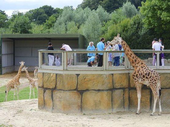 Un plan divertido para hacer en familia es ir a un safari