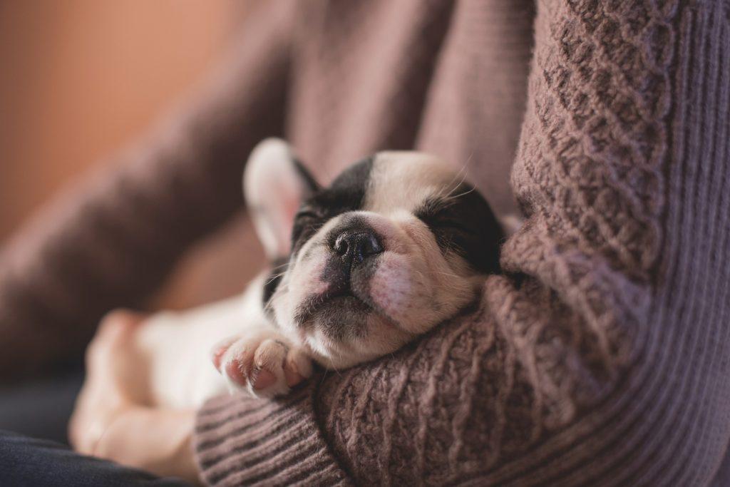 perro-viaje-tranquilo