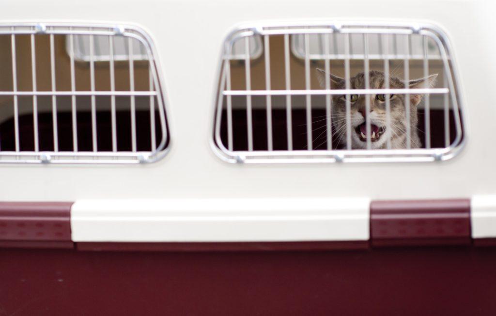viajar-con-tu-mascota-en-el-avion