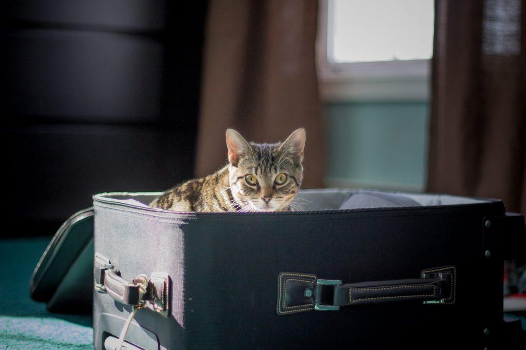 viajar-con-tu-mascota-maleta