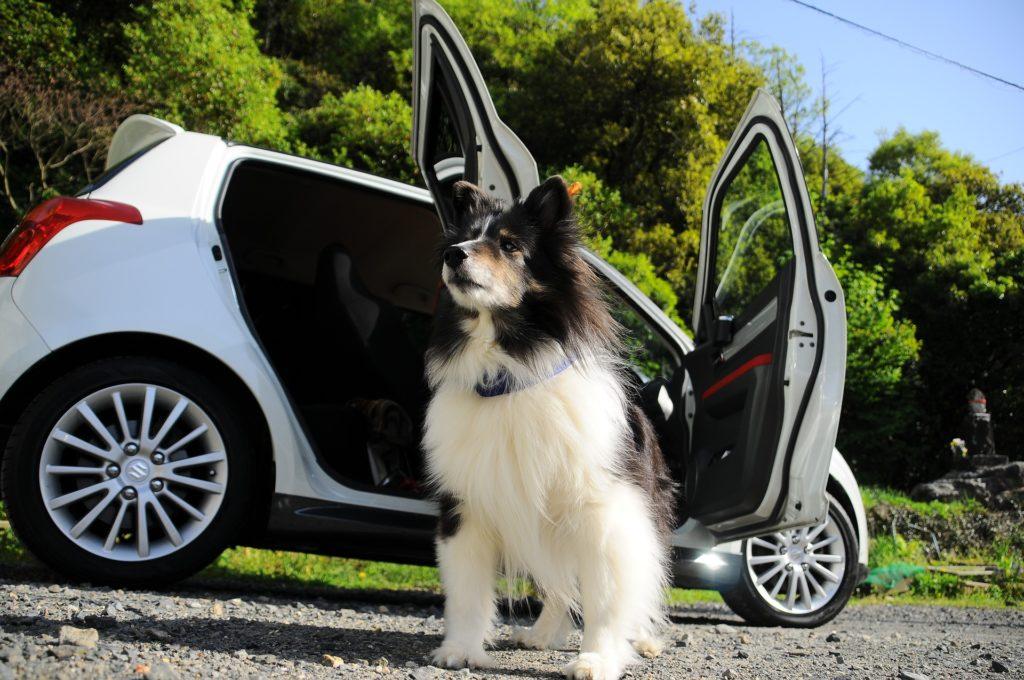 viajar-con-tu-perro-en-coche