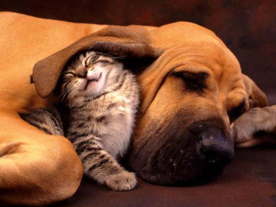fotografiar-mascotas-gato-muchosol