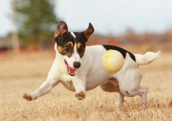 fotografiar-mascotas-perro-muchosol