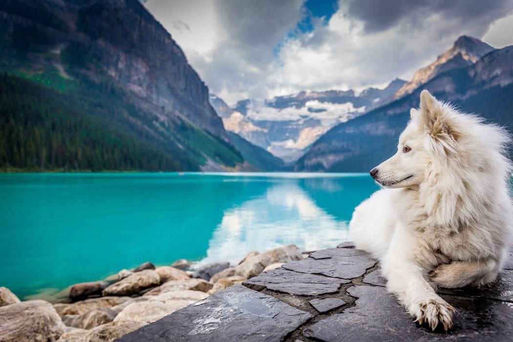 fotografiar-mascotas-portada-muchosol