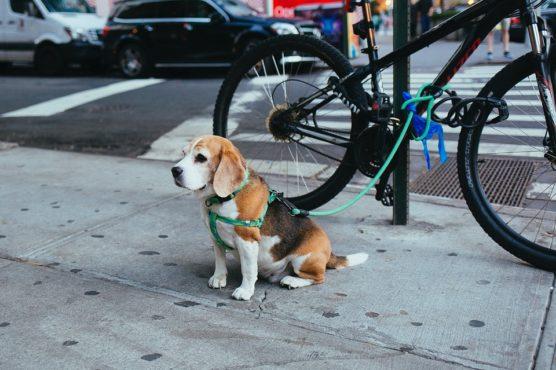 fotografiar-mascotas-seguridad-muchosol