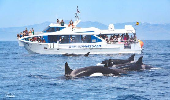 viajes-para-hacer-con-niños-ballenas-muchosol