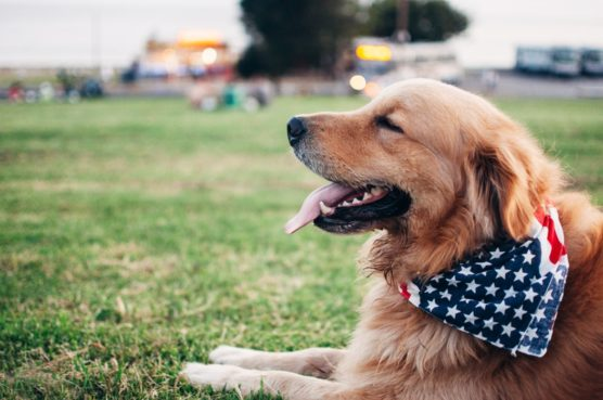viajar-con-perro-perro