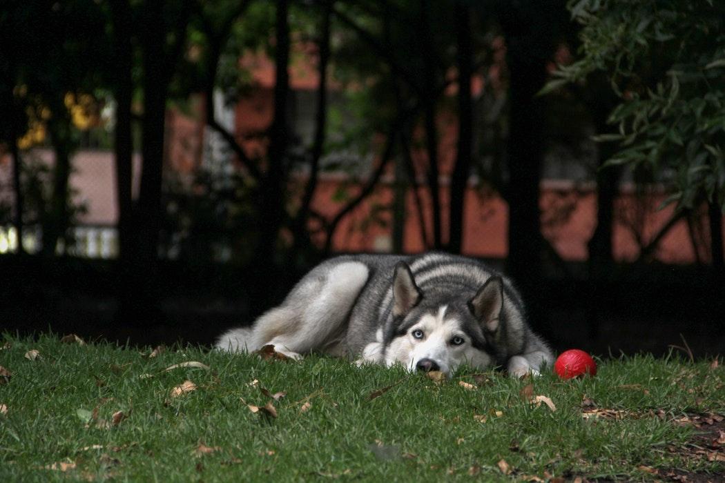 viajar-con-perro-portada
