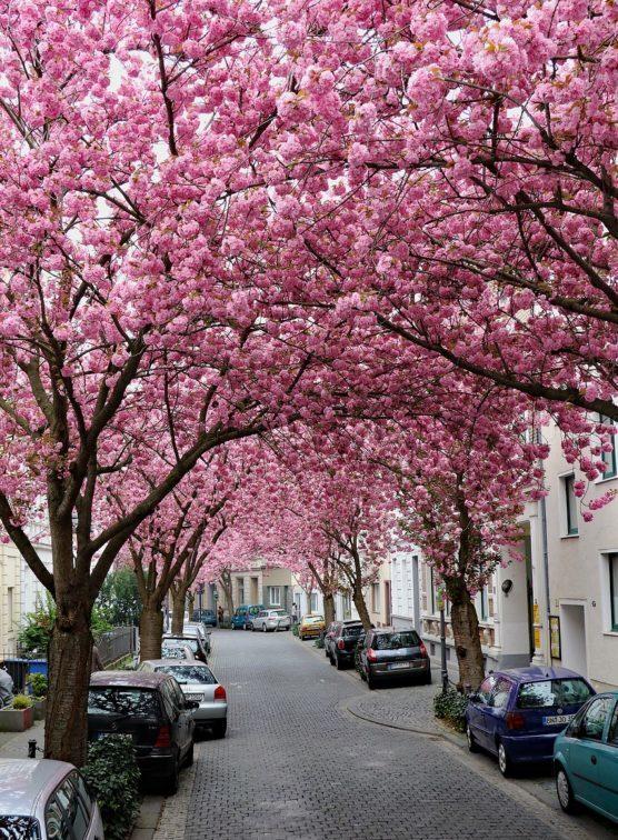 ciudades-con-flores-bonn