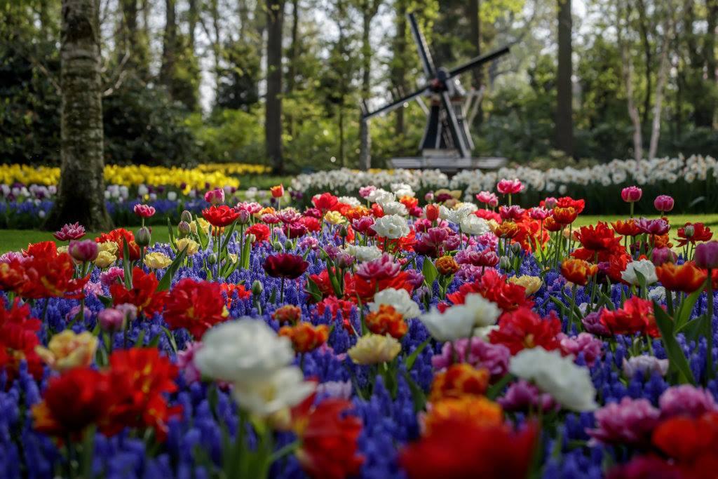 ciudades-con-flores-holanda