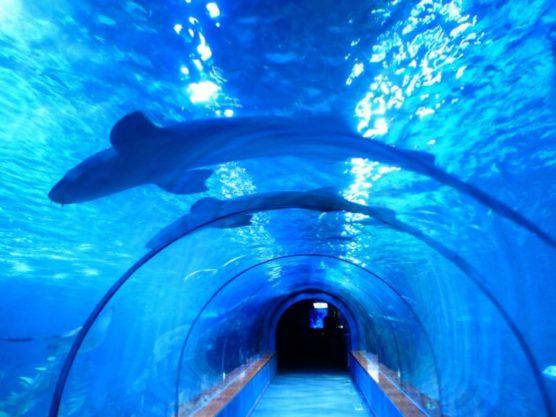 que-hacer-con-niños-en-barcelona-aquarium